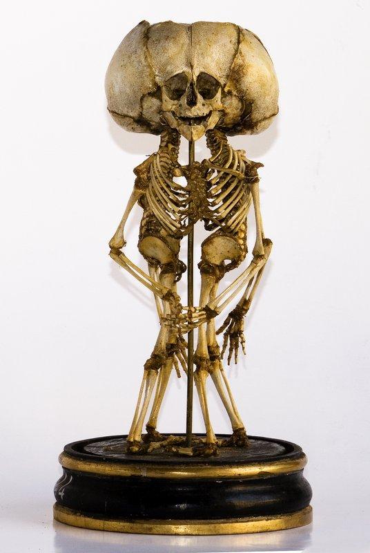 scheletri1