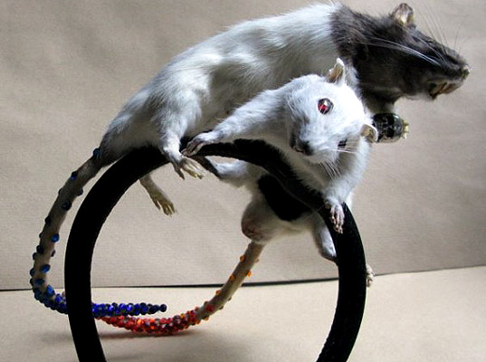 taxidermy-accessories-12