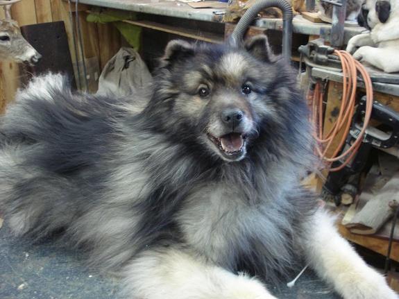 freeze-dried-gray-dog-120301