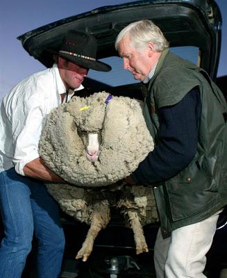 pb-110607-shrek-sheep-2.photoblog900