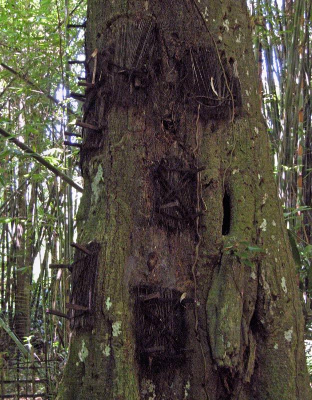 Le esequie dei toraja bizzarro bazar for Grandi capanne di tronchi