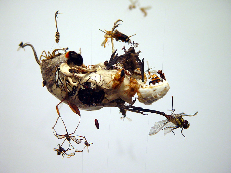 Insectary4(600)