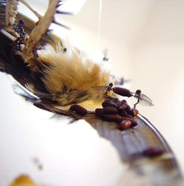 Swallow1(600)