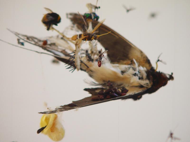Swallow2(600)