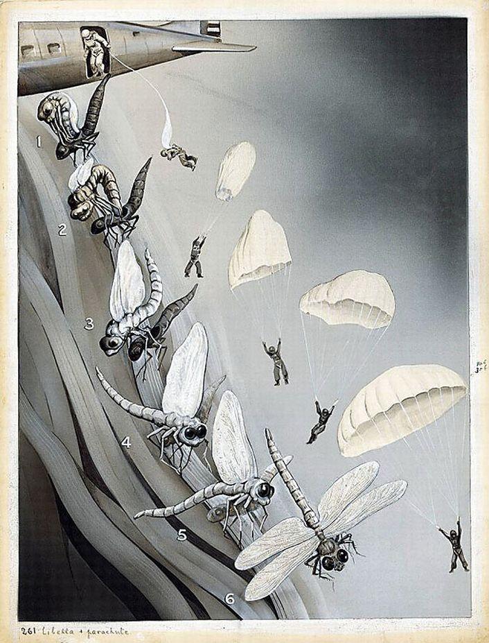 parachutes-2844151
