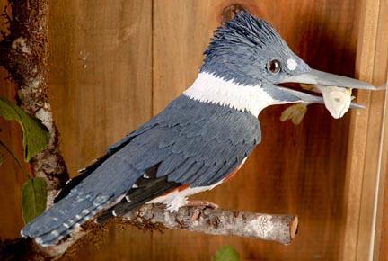 Kingfisher432