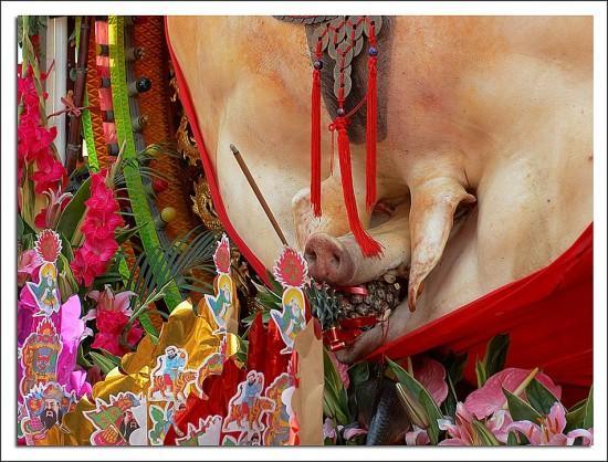 pigs-of-god-festival2-550x418