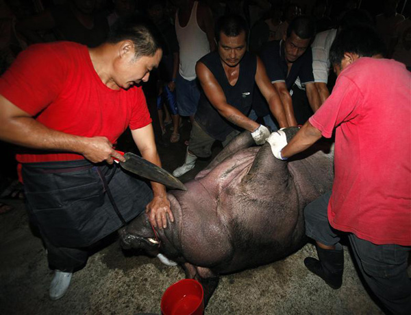 A worshipper prepares to insert a knife into the throat of a fattened pig for a sacrifice as part of the Hakka Yimin Festival in Hsinchu