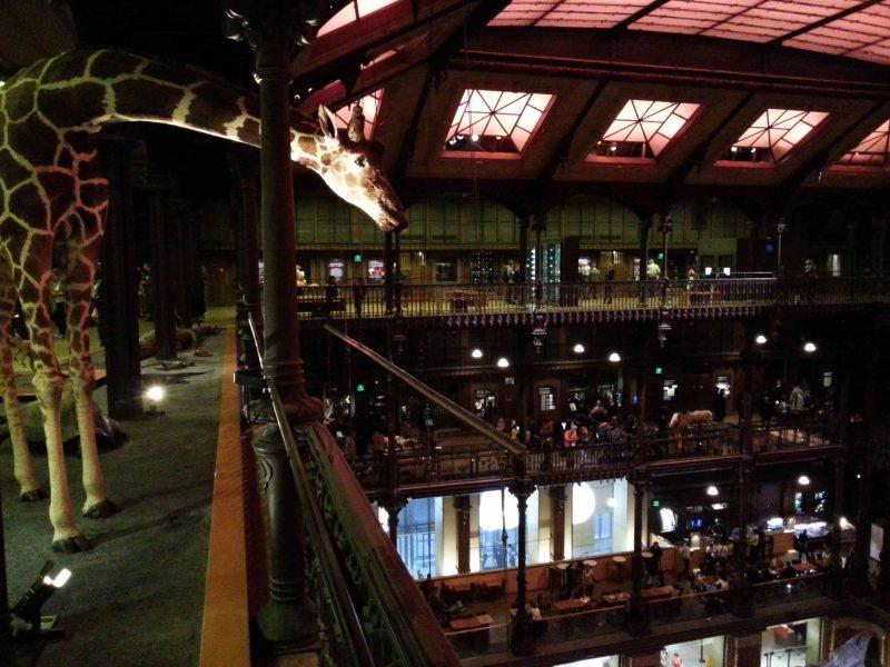 Bizzarro bazar a parigi ii bizzarro bazar for Piani di vita del sud