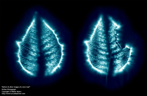 From Online Gallery: Kirlian Photography