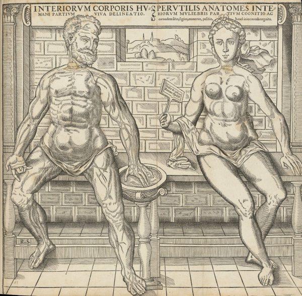 Anatomical_sheet00