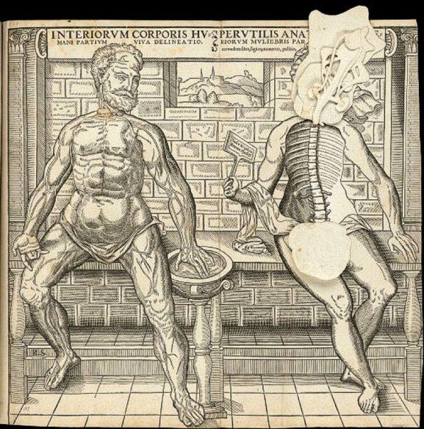 Anatomical_sheet01