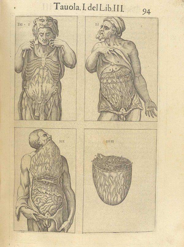 Dal medesimo volume, dissezione del peritoneo in tre atti. Nella terza figura, il personaggio tiene fra i denti la propria parete addominale per mostrarne il reticolo vascolare.