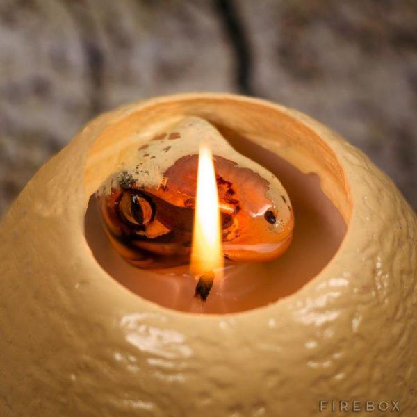 hatching-dinosaur-egg-candle-6695