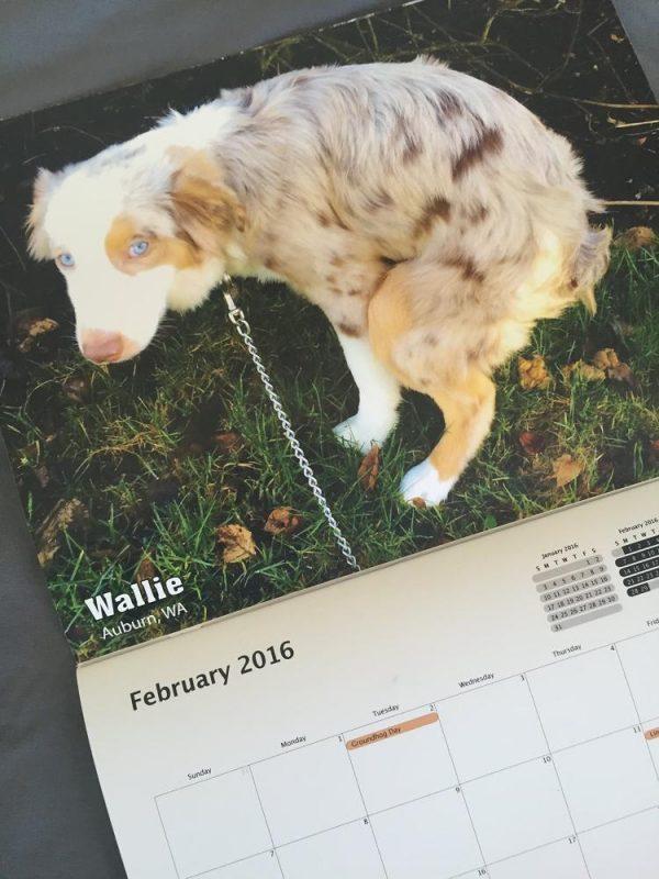pooping-dogs-calendar-2016-9709