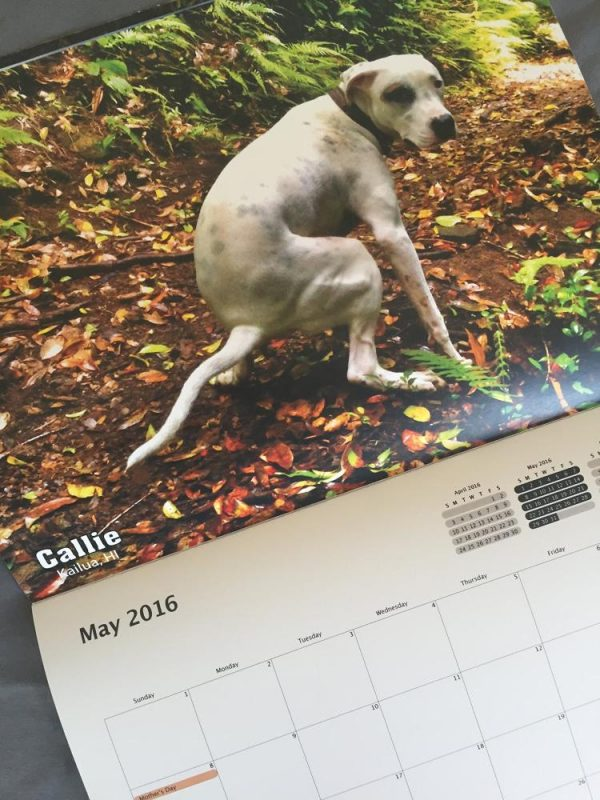 pooping-dogs-calendar-2016-thumb